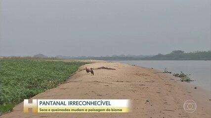 Pantanal vive a pior seca em 50 anos
