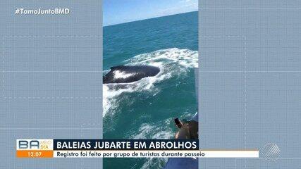 Turistas registram baleias jubarte numa expedição em alto mar em Abrolhos