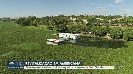 Represa de Americana tem redução do nível de água para desidratar plantas aquáticas