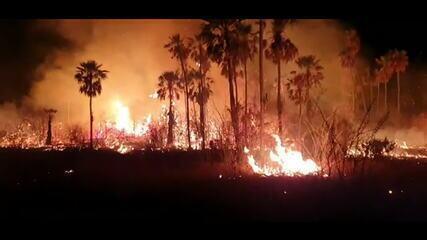 Em 2020, 23% do bioma do Pantanal foi destruído pelo fogo dos incêndios