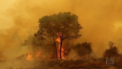 Fires in the Pantanal of Mato Grosso have already destroyed 40% of the vegetation