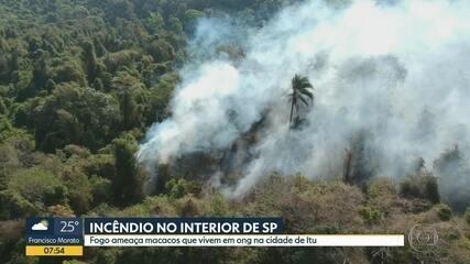 Focos de incêndio ameaçam área de ONG que cuida de macacos, em Itu