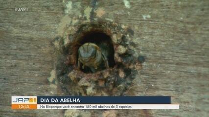 Dia da Abelha: Bioparque da Amazônia reúne 150 mil insetos de 3 espécies; conheça