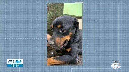 Homem é preso em Maceió por causa de maus-tratos a animais