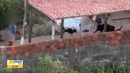 Em Olinda, vídeo flagra animais sendo maltratados com toalha e cabo de vassoura