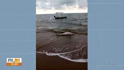 Golfinho é encontrado morto encalhado em praia de Porto de Pedras, AL