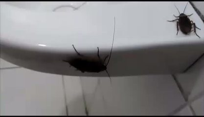 Conselho Tutelar está infestado de baratas por falta de limpeza na Zona Leste de SP
