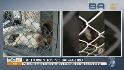 Cachorros em situação de maus-tratos são resgatados de ônibus na Bahia