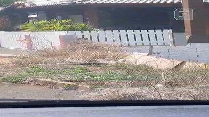 Moradora de Chapecó flagra passarinho atacando lagarto