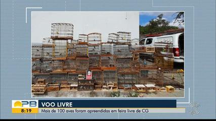 Mais de 100 pássaros foram apreendidos em feira livre, em Campina Grande