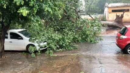 Pancada de chuva provoca alagamentos e derruba árvore em cima de carro em Campo Grande
