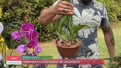 Luciano Camargo fala sobre quarentena em família e aprende a fazer mudas de orquídeas