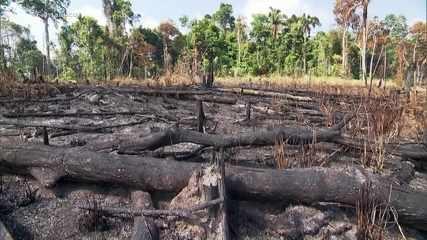 Nova pesquisa destaca que brasileiros estão unidos na defesa da Amazônia