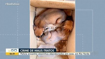 Homem é preso suspeito de maus-tratos após abandonar cãezinhos em Rio Verde