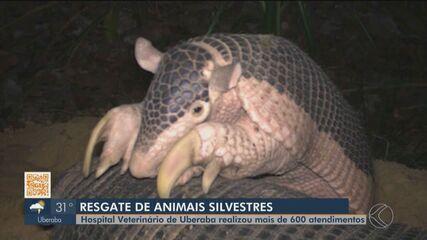 Hospital Veterinário de Uberaba realiza mais de 600 atendimentos a animais silvestres em 2
