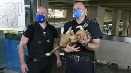 Metrô paralisa atividades na linha 1-Azul para salvar cachorra presa dos trilhos