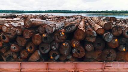 VÍDEO: PF apreende toneladas de madeira extraída ilegalmente da Amazônia