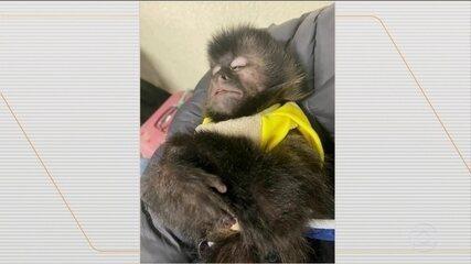 Polícia prende em SP um dos maiores traficantes de animais silvestres do país