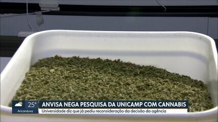 Anvisa nega pesquisa com cannabis à Unicamp