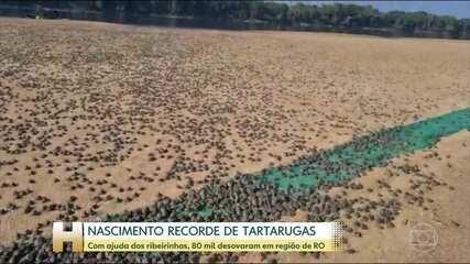 Projeto de comunidade ribeirinha de Rondônia salva tartarugas e tracajás