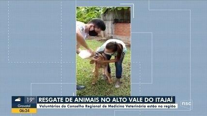 Voluntários do Conselho de Veterinária vão até o Vale do Itajaí resgatar animais