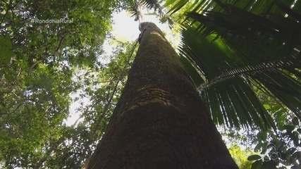 Série Biodiversidade na Amazônia