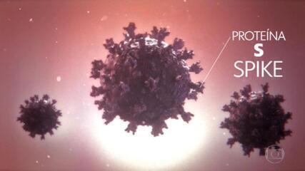 Governo de São Paulo confirma presença de nova variante do coronavírus no Brasil.