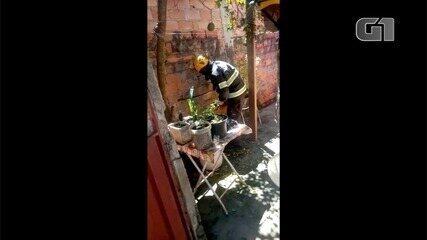 Bombeiros têm trabalho para resgatar cobra, em Caldas Novas