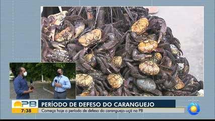 Período de defeso do caranguejo-uçá começa nesta quinta-feira (14), na Paraíba