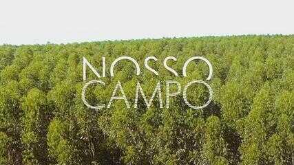 Confira o 1º bloco do Nosso Campo deste domingo, 17 de janeiro
