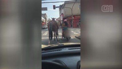 Motociclista chamou atenção ao levar cavalo para passear