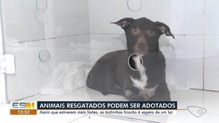 Animais resgatados em apartamento serão colocados para adoção, no ES