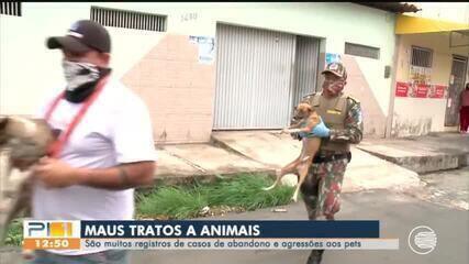 Crescem os registros de maus tratos e abandono de animais