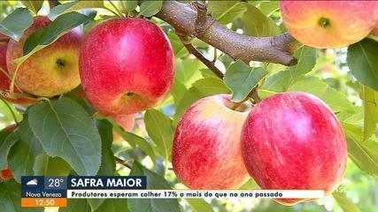 Produtores de maçã esperam aumento na safra em SC