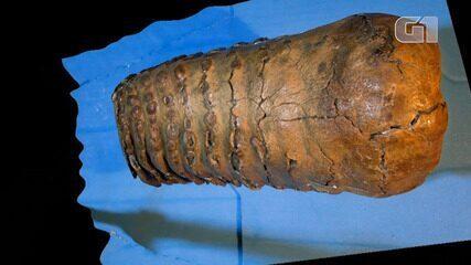 VÍDEO: Pesquisadores descobrem DNA mais antigo do mundo em mamutes na Sibéria
