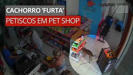 Cachorro entra em pet shop e 'furta' petiscos no interior do Paraná; VÍDEO