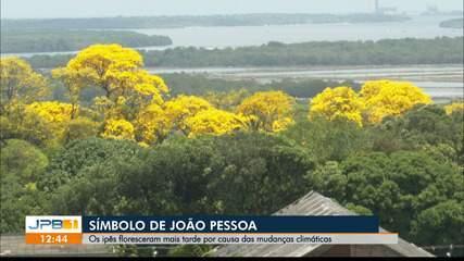 Paraíba que Floresce e Colhe: ipês são o símbolo de João Pessoa