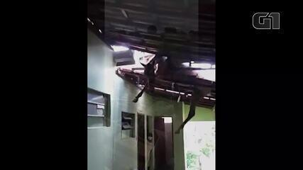 Cavalo cai no telhado da prefeitura de Aricanduva