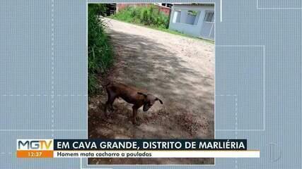 Jovem mata cachorro a pauladas em Marliéria