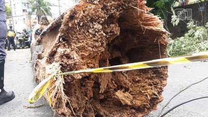 Árvore cai em cima de carro e deixa feridos na região da Cidade Baixa, em Salvador