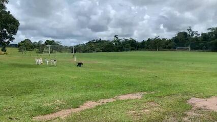 Galvez e Rio Branco-AC paralisam atividades e Atlético-AC estuda possibilidade