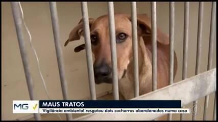 Dois cachorros em situação de maus-tratos são resgatados em Divinópolis