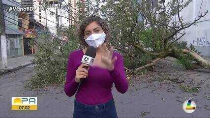 Árvore cai e interdita pista no bairro do Umarizal, em Belém