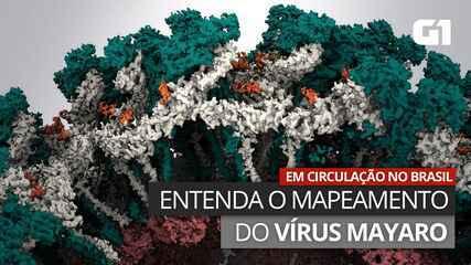 VÍDEO: Entenda a pesquisa que mapeou o vírus mayaro, em circulação no Brasil