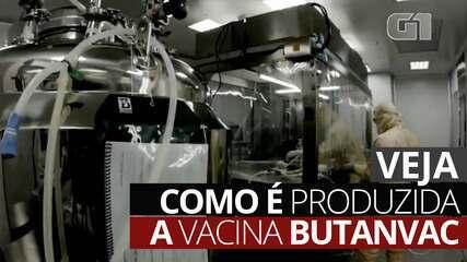 VÍDEO: Veja como é produzida a vacina Butanvac