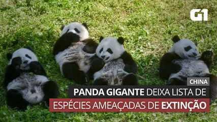 VÍDEO: Panda gigante deixa lista de animais ameaçados de extinção