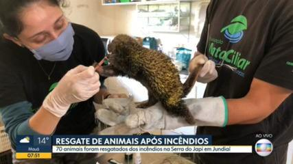 Animais da Serra do Japi são resgatados