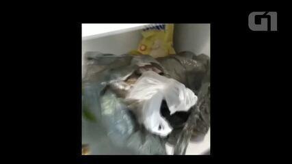 Sacola de maconha é encontrada dentro de geladeira junto com verdura em operação do Denarc