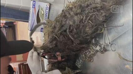 Cadela é resgatada após ser encontrada com insetos, nós, inflamações e patas amarradas