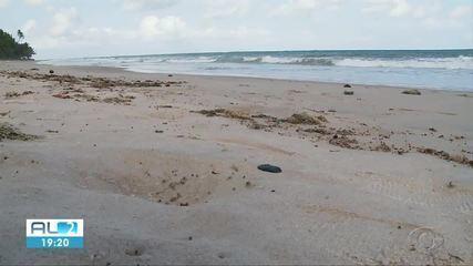 Novas manchas de óleo são encontradas em praia de Coruripe